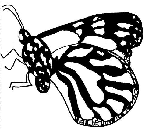 NToledo_Butterfly